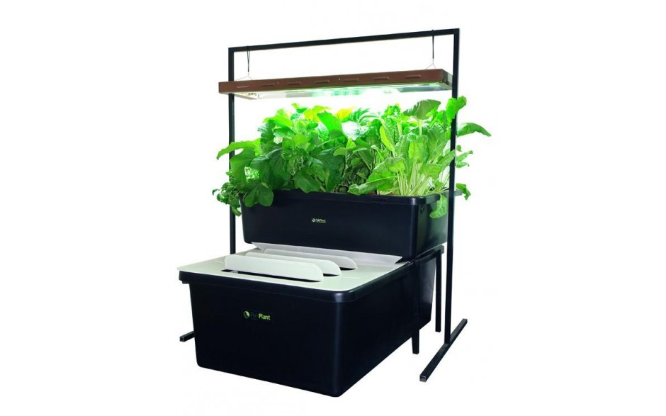 FishPlant Aquaponics Family Unit